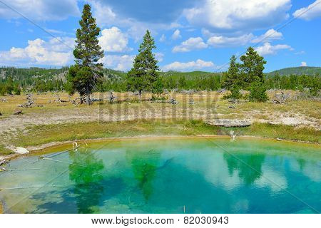 Trees Reflecting In The Pool In Biscuit Basin In Yellowstone National Park In Summer