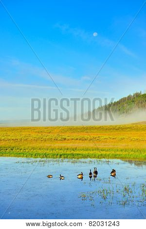 Ducks In The River In Hayden Valley Of Yellowstone National Park In Summer Morning