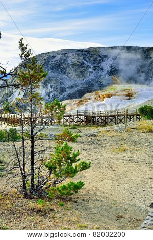 Trees And A Walkway In Mammoth Hot Springs Area Of Yellowstone National Park, Wyoming