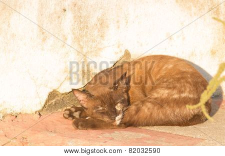 sleepy wild cat sunbathe