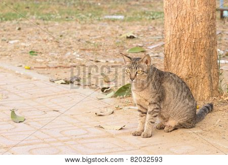 wild cat sitting sunbathe