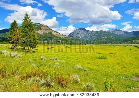 Lamar Valley In Yellowstone National Park, Wyoming In Summer