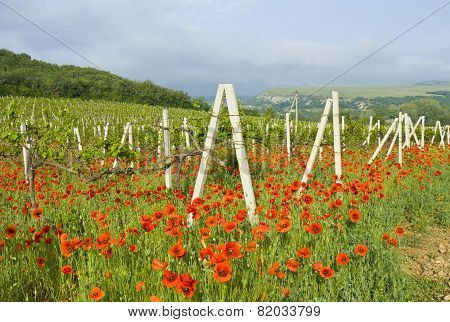 Red Poppies With Vineyard