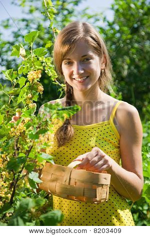 Girl Is Picking White Currant