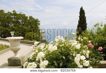 Rose Garden On Sea Coast