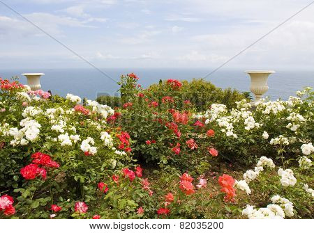 Rose Garden With Vases And Sea