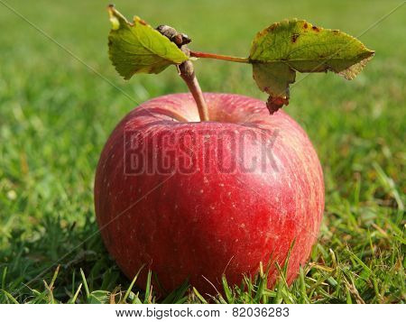 autumn fruit in the grass, Southern Bohemia