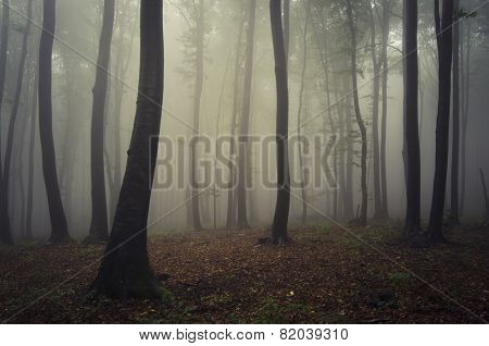 Mysterious fantasy forest with fog trough trees
