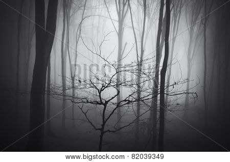 Dark haunted forest with fog