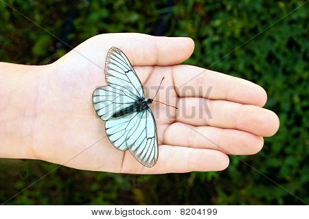 Butterfly On Infant Hand