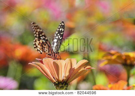 Butterfly On Nice Flower