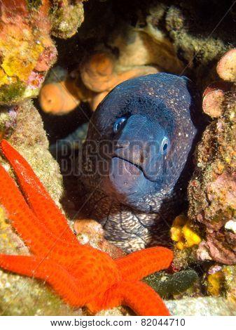 Moray And Starfish