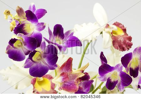 Purple Orchid On Gray Background