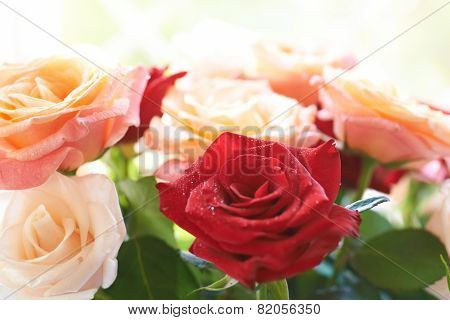 Bouquet Of Red And White Beautiful Roses