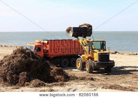 The Tractor Loads Algae Into Truck