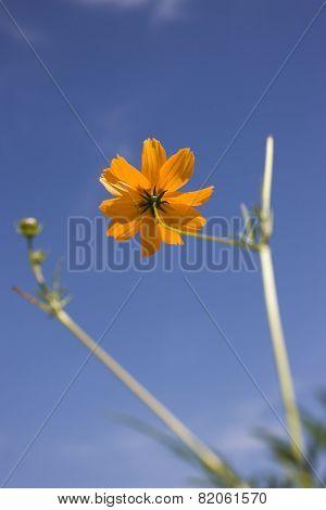 Yellow daisy and sky