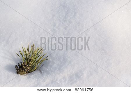 Pinecone in a snow as copyspace composition