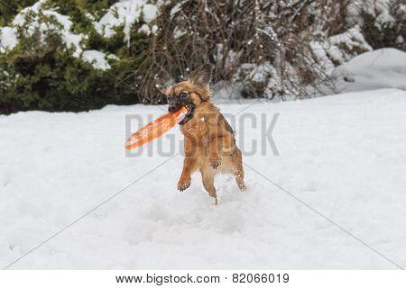 Brown Dog Is Catching Orange
