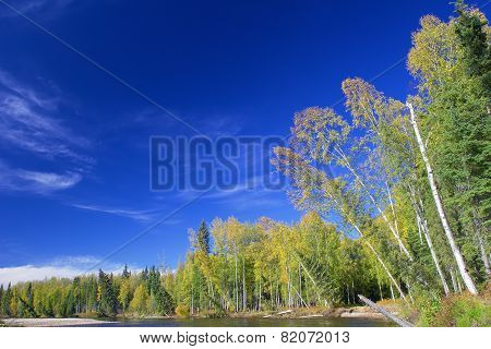 Trees On Riverbank Of Chena River