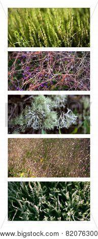 Vegetation Backgrounds