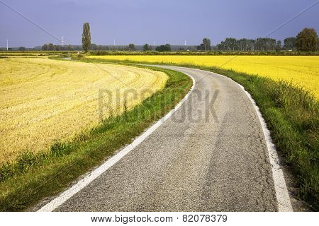 Country road through paddy fields. Color image