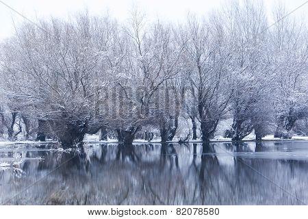 Trees In A Frozen Lake