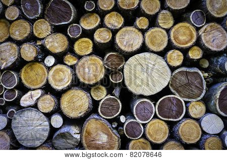Group of cutted firewood. Color image