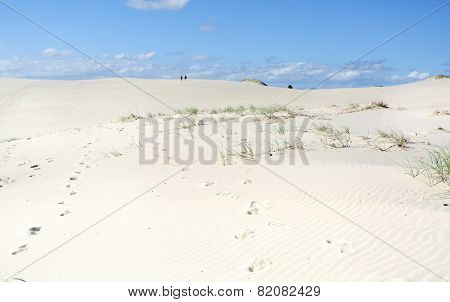 Dark Point Sand Dunes Australia