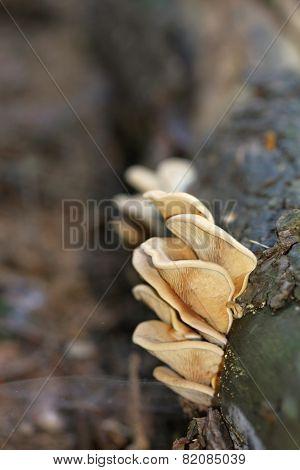 Unidentified Yellow Mushrooms
