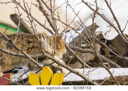 Cat On Hunting