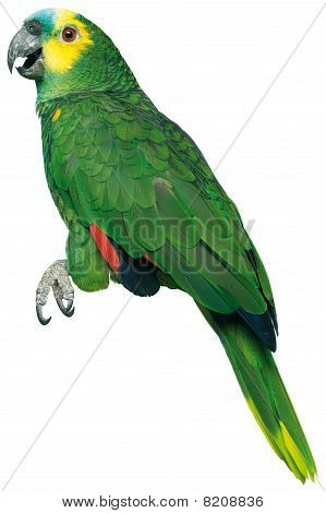 Green Stuffed Parrott On A White Background