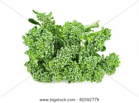 Baby Broccoli Isolated On White Background