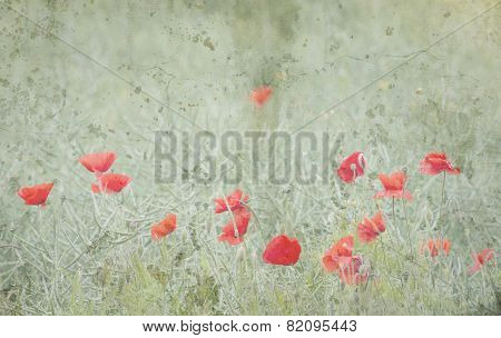 Matted Poppies in Field