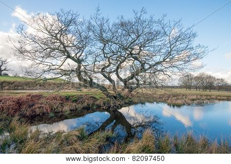 Tree by a Pond