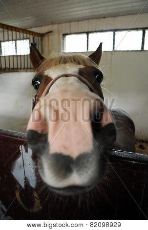 Horse Head Close-up
