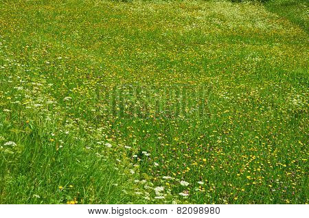 Summer Field With Many Different Flowers