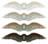 stock photo of cherubim  - Digital illustration of wings - JPG