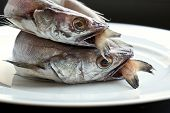 foto of hake  - Two hakes in a plate in a kitchen - JPG