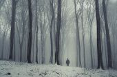 stock photo of fog  - Man walking in winter forest with fog and trees - JPG
