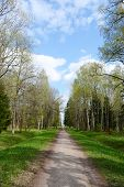 stock photo of tsarskoe  - Alley in Alexandrovsky Park in Tsarskoe Selo at sunny spring day St - JPG