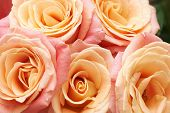 stock photo of orange blossom  - Bunch of orange and red beautiful roses - JPG