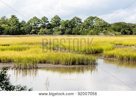 Green Marsh Grasses