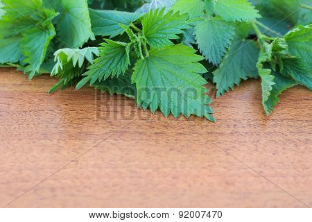 Branches Of Nettle