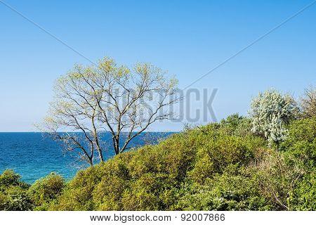 Coastal Forest On The Baltic Sea