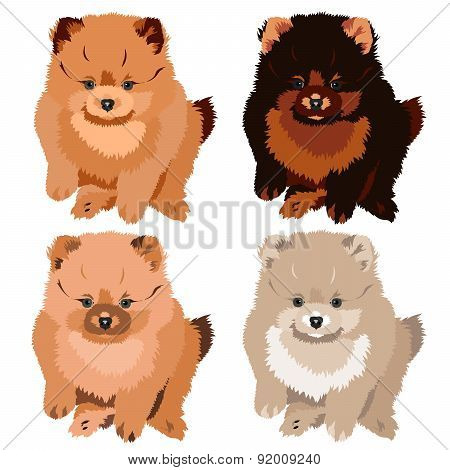 Vector Illustration Pomeranian Spitz Dog Puppy. 4 Colors: White, Peach, Brown And Yellow.