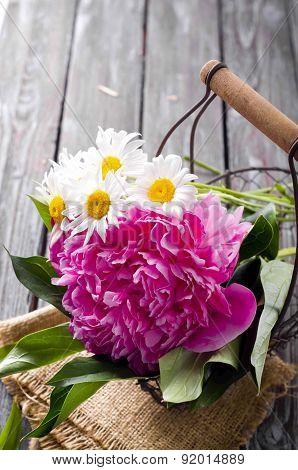 Flowers Pink Peony