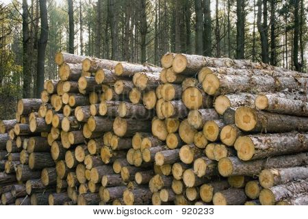 Logging Stack