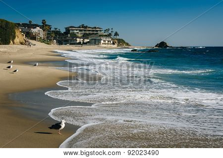Waves And Seagulls In The Pacific Ocean At Victoria Beach, In Laguna Beach, California.