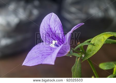 Closeup of purple flowers