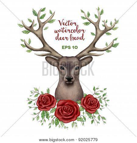 Vector watercolor illustration of deer head.